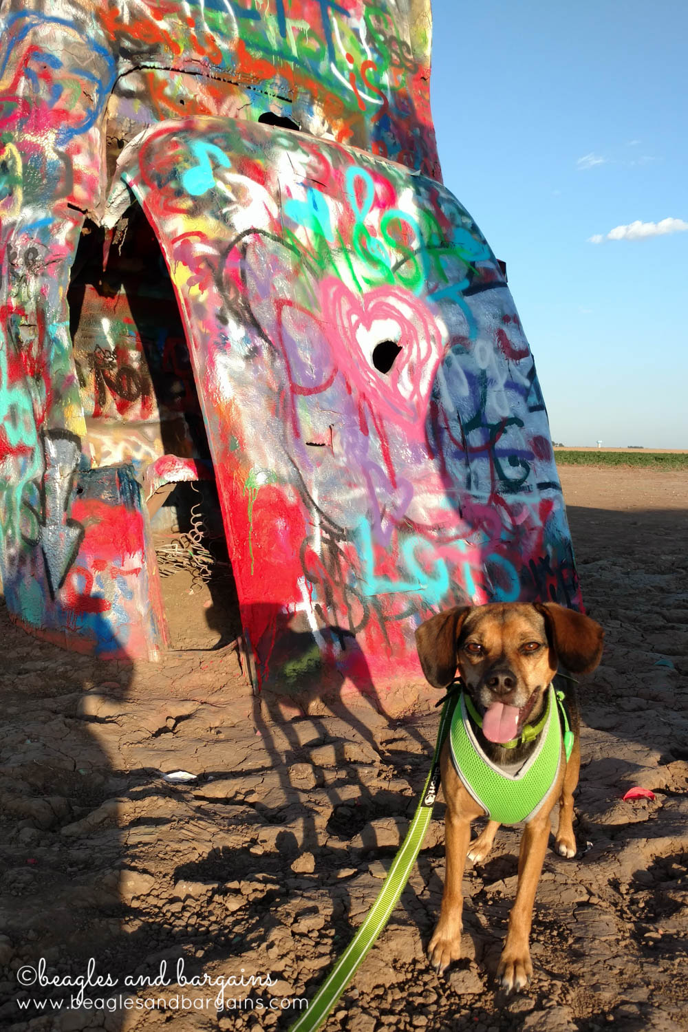 Luna enjoys the colorful cars at the Cadillac Ranch - RoadTrippinBeagle