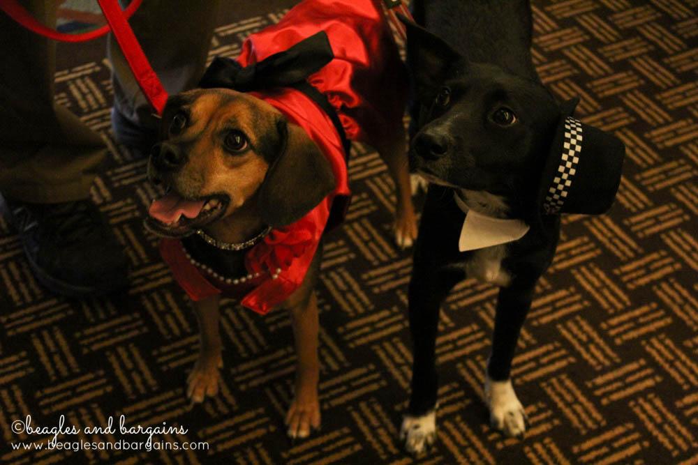 Ralph and Luna strut their stuff down the BlogPaws red carpet.