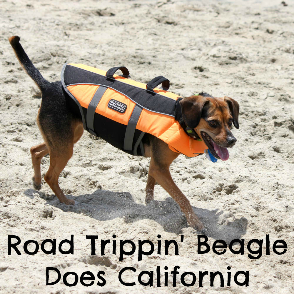 Road Trippin' Beagle Does California
