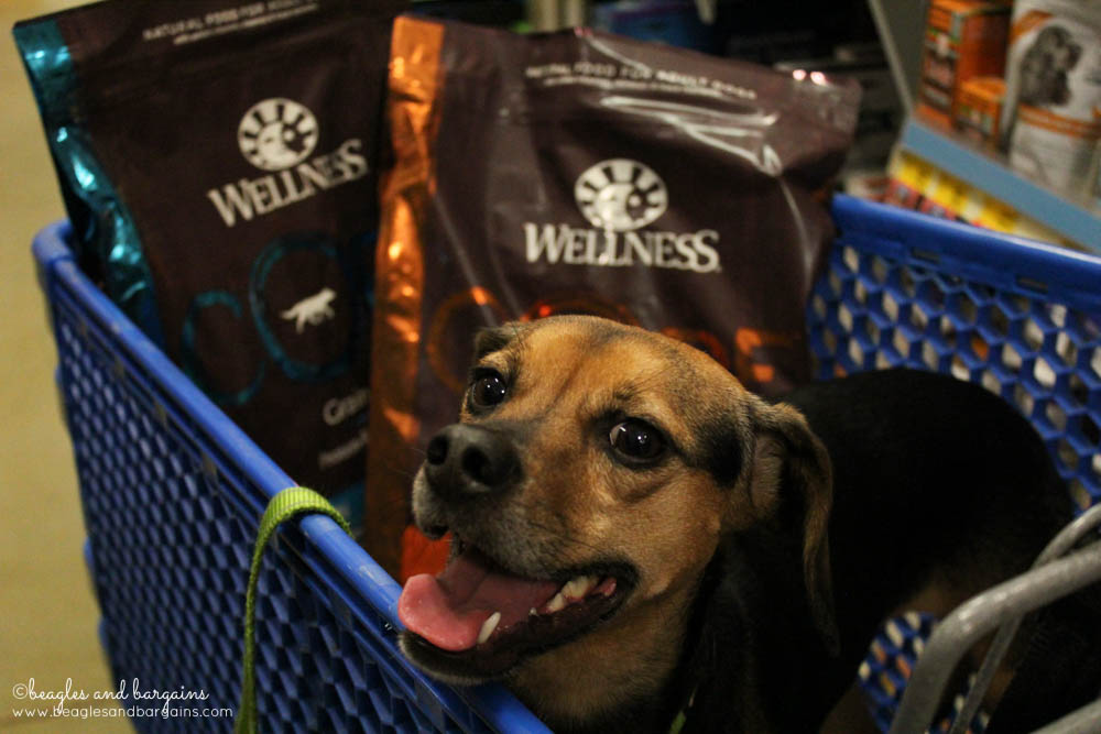 Luna is excited about trying Wellness CORE dry dog food