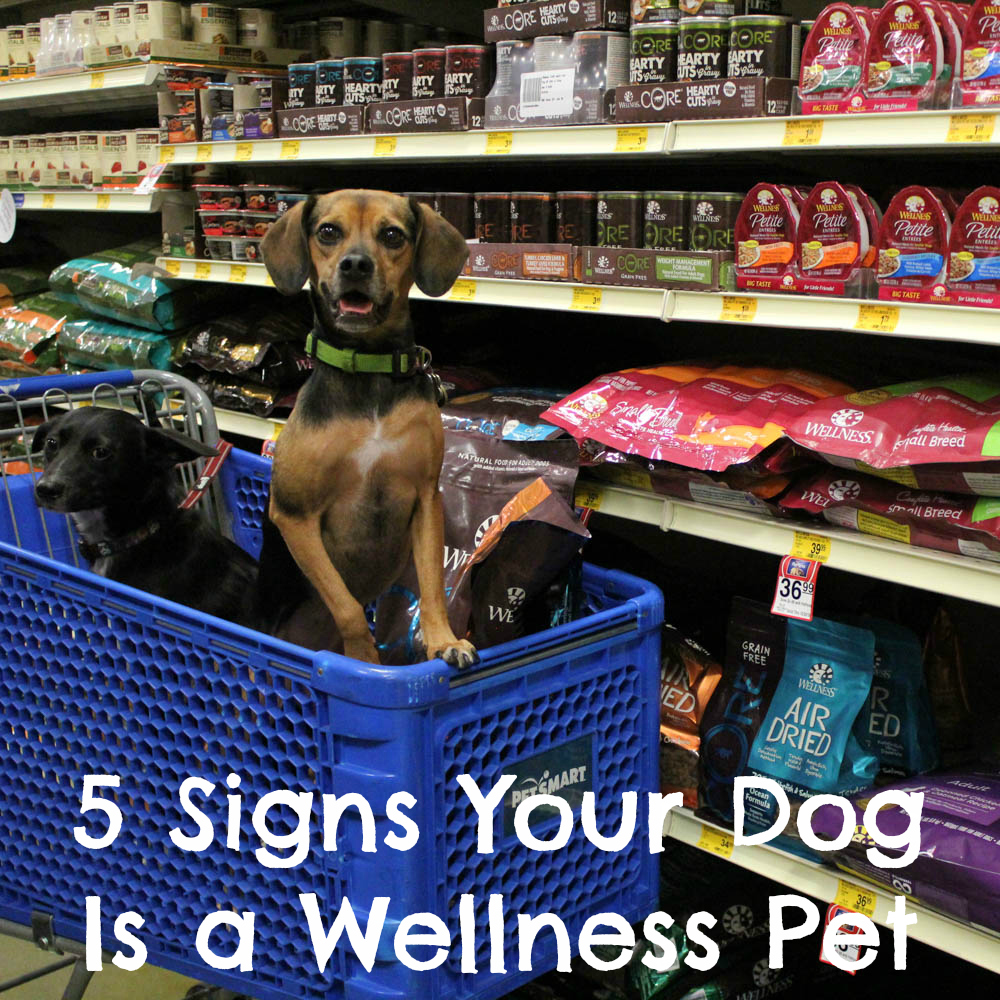 5 Signs Your Dog Is a #WellnessPet