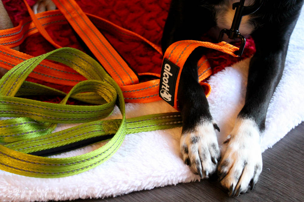 Ralph's paws with a bright orange and green leash from Alcott Adventures