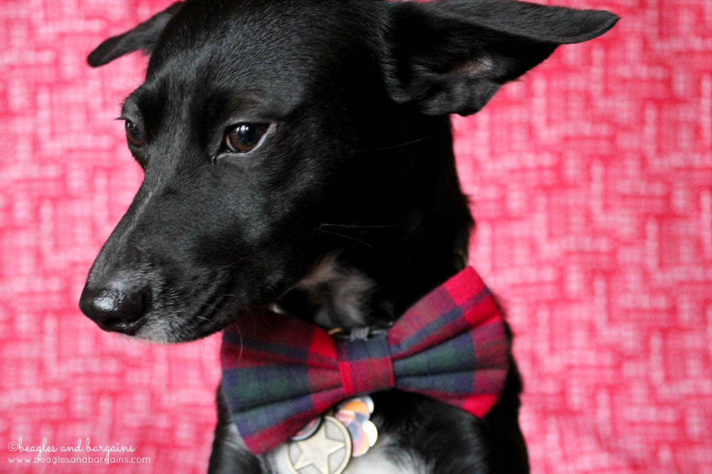 Ralph looks suave this holiday season with his Christmas plaid bow tie from Brooklyn Bowtied