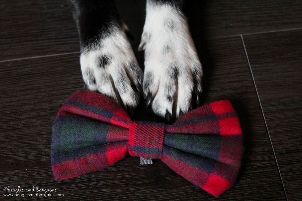 The Leonard Bow Tie for Dogs from Brooklyn Bowtied
