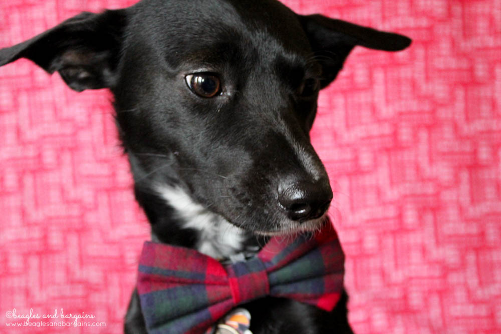 Ralph models his Christmas Plaid Bow Tie from Brooklyn Bowtied