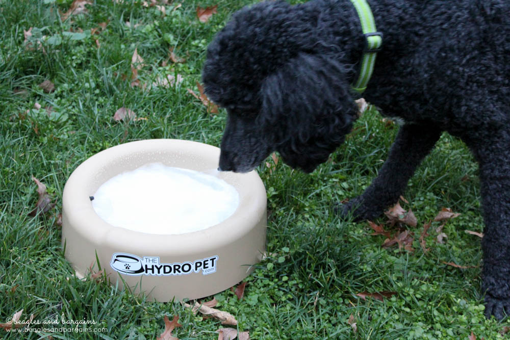 Cousin Keto drinks fresh water from The Hydro Pet Bowl