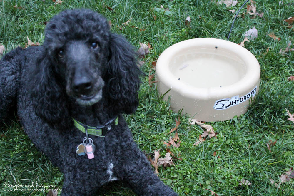 Cousin Keto with his new The Hydro Pet Bowl