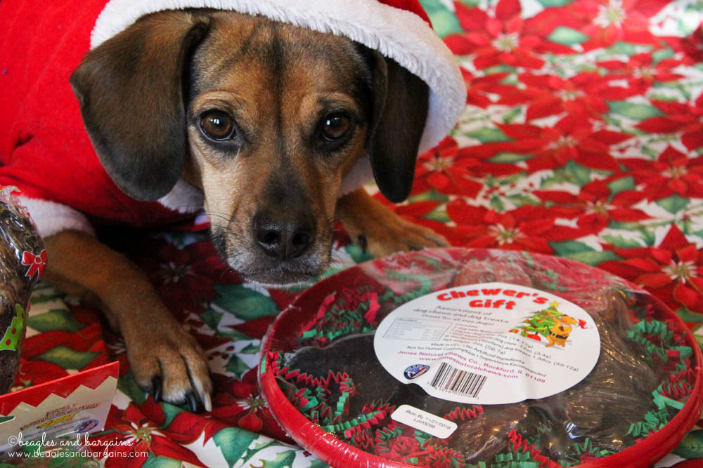 Luna thinks she was good this year because she got a Chewer's Gift with Woofermen and Candy Canes from Jones Natural Chews.