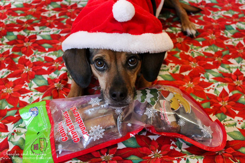 Luna can't wait to open her Christmas Crunchers Stocking from Jones Natural Chews