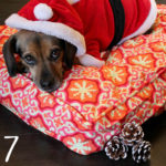 Beagles & Bargains Stocking Stuffer Giveaways 2016 - Day 7 - Molly Mutt