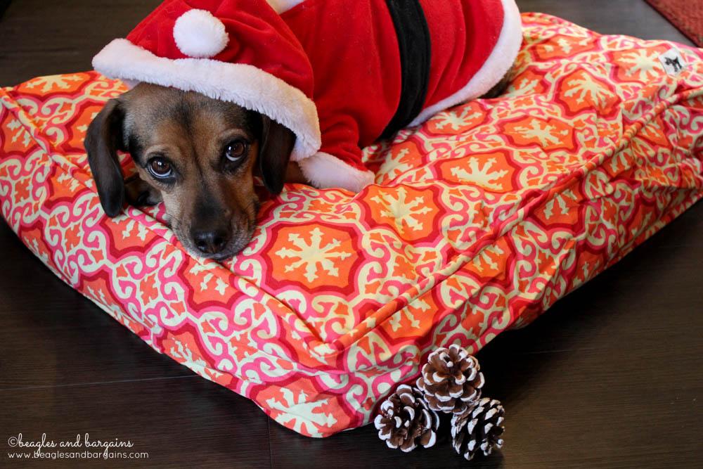 Luna enjoys her new Molly Mutt dog bed from a comfy duvet