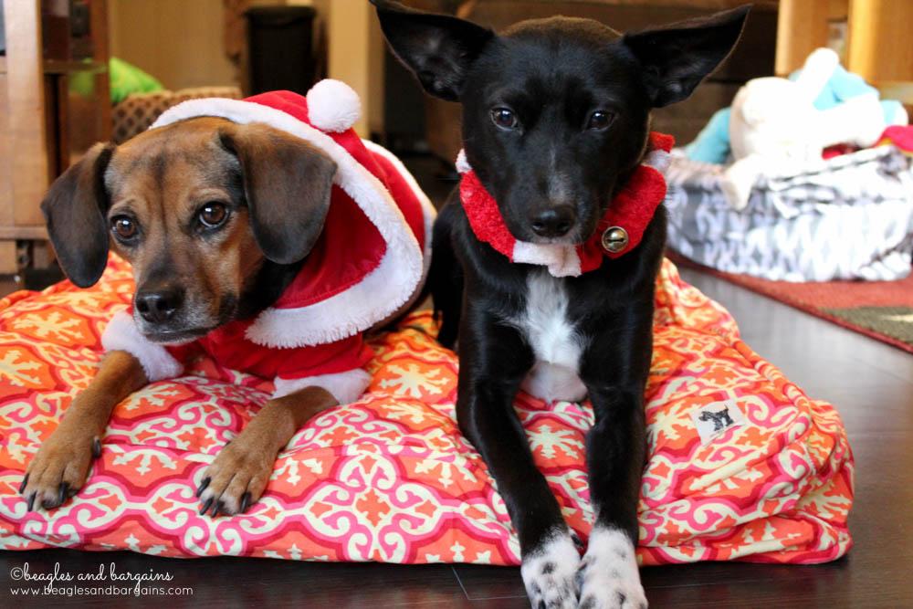 Ralph and Luna enjoy their new Molly Mutt Duvet dog bed.