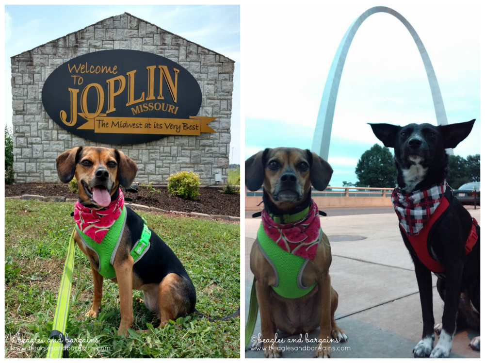 Ralph and Luna in Joplin, Missouri and St. Louis by the Arch