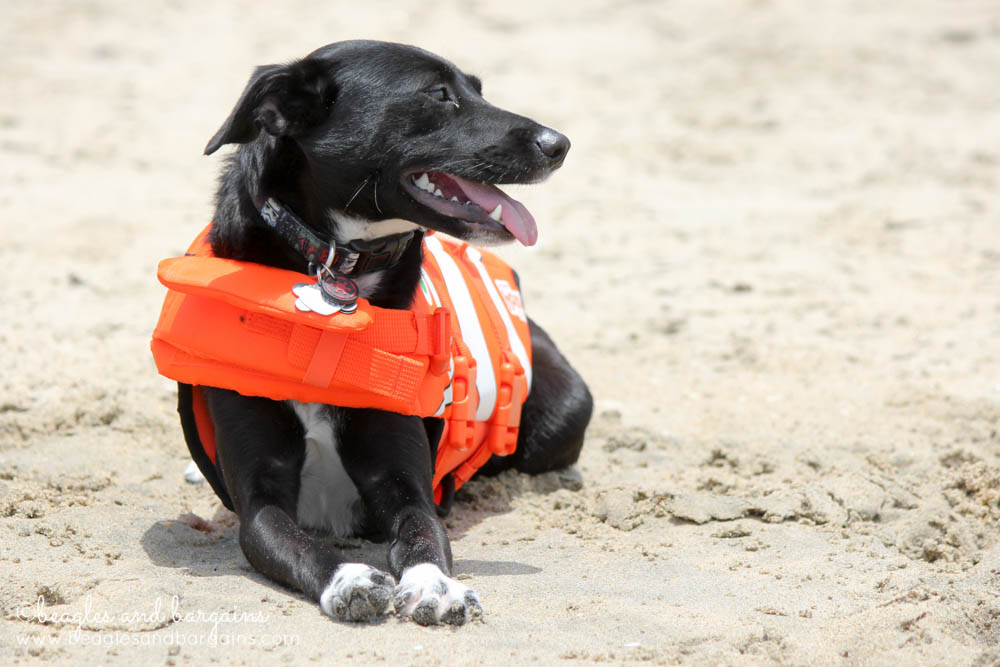 Fun Activities to Do Outside with Your Dog - Find the Nearest Beach