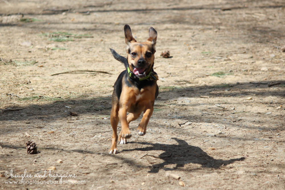 Fun Activities to Do Outside with Your Dog - Visit an Off-Leash Dog Park
