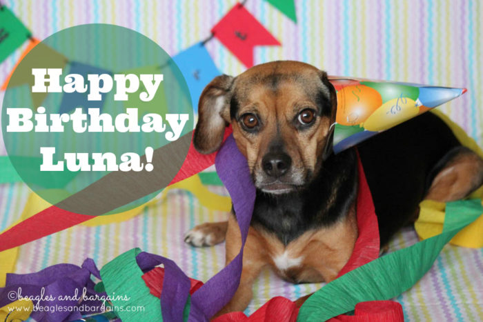 Happy 6th Birthday Luna! | Dog Birthday Celebration