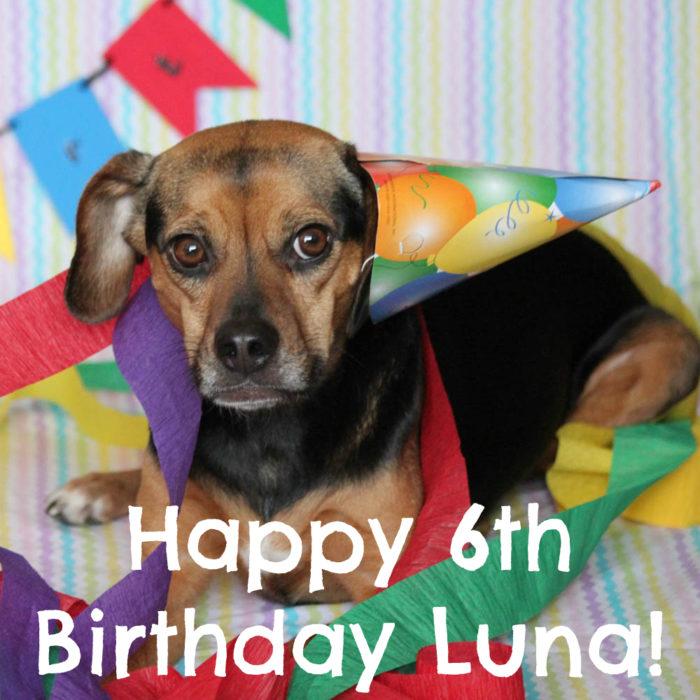 Happy 6th Birthday Luna! | Dog Birthday Celebration
