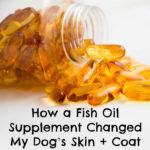 How a Fish Oil Supplement Changed My Dog's Skin and Coat