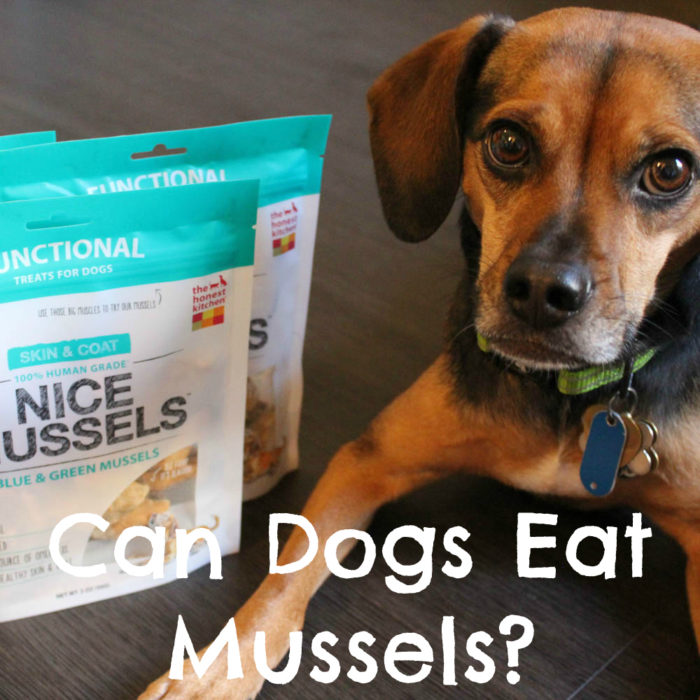 Can Dogs Eat Mussels?