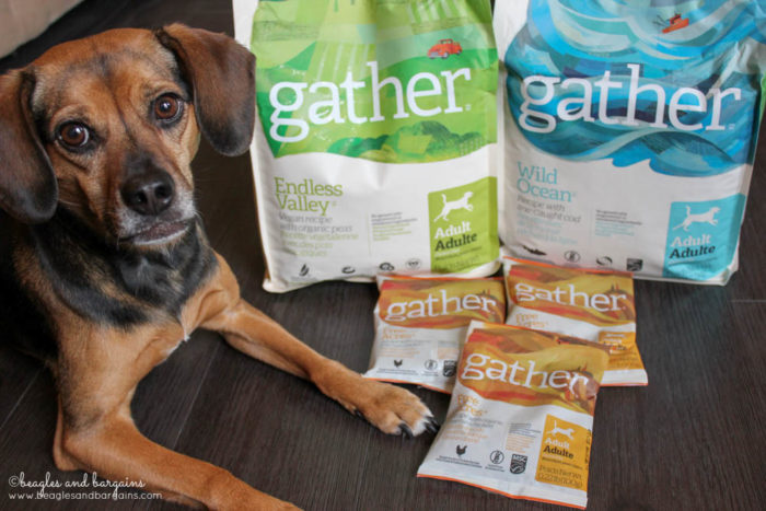 Petcurean Expands Pet Food Line with Organic, Sustainably Produced GATHER | dogs | cats