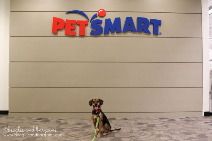 Happy 6th Birthday Luna! | Visiting PetSmart's Home Office in Phoenix