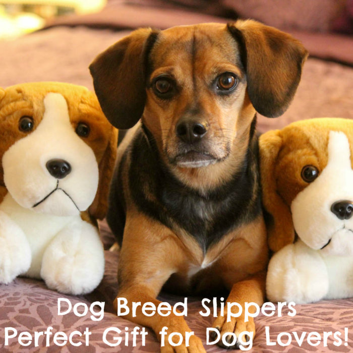 Dog Breed Slippers Are the Perfect Gift for Dog Lovers! Find out how to get yours.