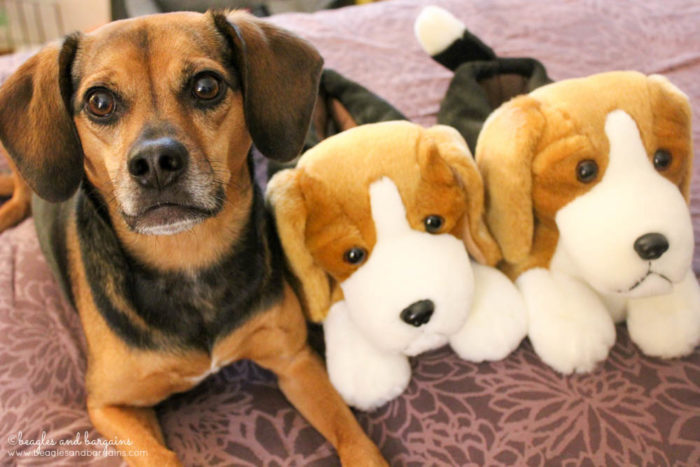 Beagle Slippers make great gifts for dog lovers and dog moms alike!