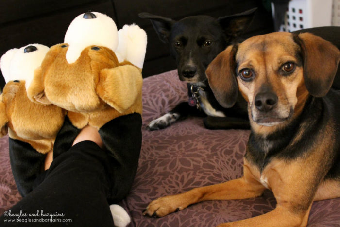 Show off your dog mom pride with dog breed slippers like my Beagle Slippers from BunnySlippers.com #sponsored