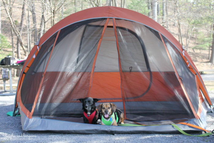 Camping with Dogs -  Spring Fling Pet Blogger Giveaway - Win a $250 Amazon Gift Card!