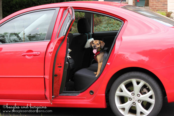 Get Your Dog Accustomed to Your Car -  Tips for Planning a Successful Pet Friendly Road Trip - Ultimate Pet Friendly Road Trip Guide