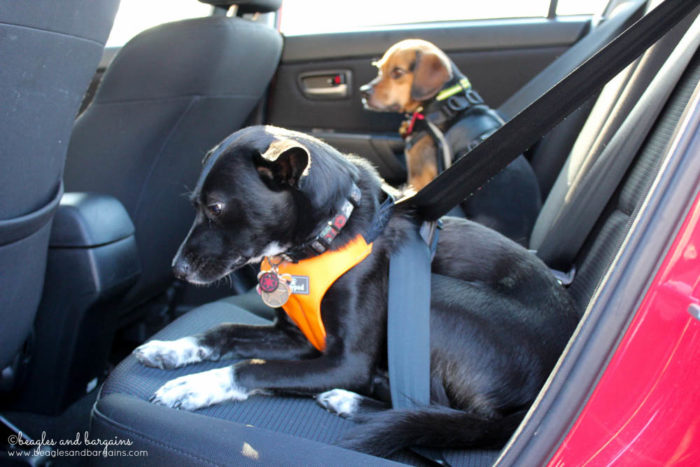 Pack a Crash Tested Dog Harness - Tips for Planning a Successful Pet Friendly Road Trip - Ultimate Pet Friendly Road Trip Guide