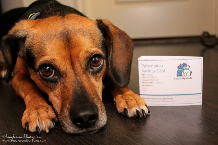 Luna with our new Fetch My Meds discount card for savings on pet medications