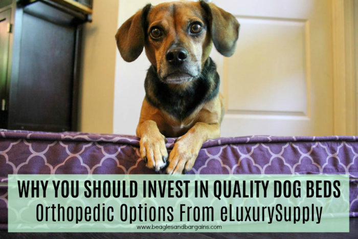 Why You Should Invest in Quality Dog Beds -  Orthopedic Options From eLuxurySupply