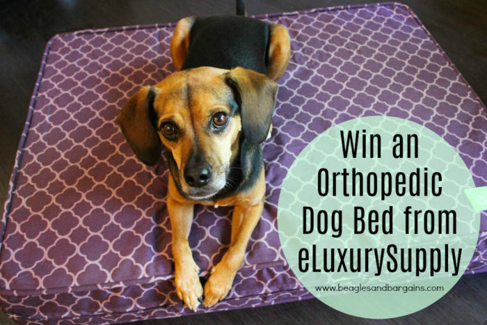 Win an Orthopedic Dog Bed from eLuxurySupply - Giveaway!