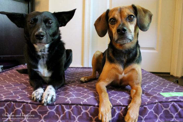 Purple Orthopedic Dog Bed from eLuxurySupply