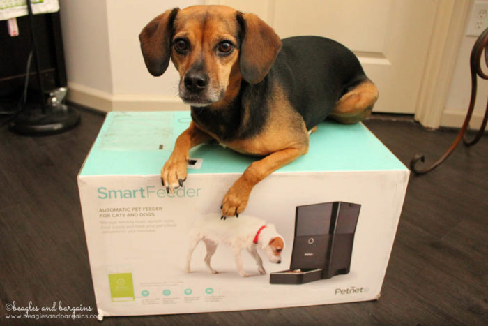 Luna with her Petnet SmartFeeder delivery
