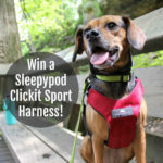 Get Pet Friendly Road Trip Ready with Sleepypod – Win a Clickit Sport Harness!