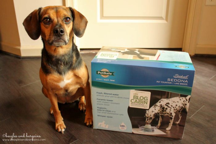 PetSafe Drinkwell Sedona Fountain  #sponsored - Pet Hydration Month