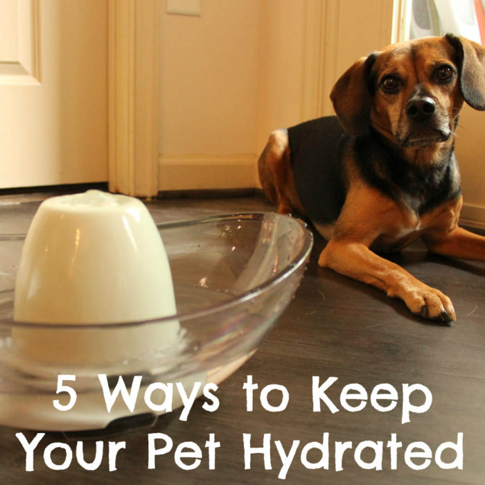 5 Ways to Keep Your Pet Hydrated - Pet Hydration Month