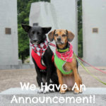 We Have An Announcement!