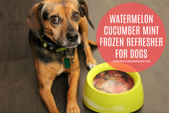 Watermelon Cucumber Mint Frozen Refresher for Dogs Recipe. Great in Sleepypod Yummy Travel Bowls #sponsored