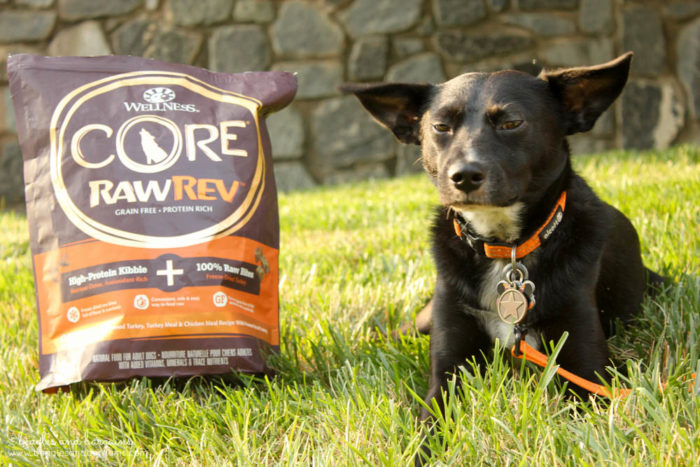 Tips to Beat the Heat and Enjoy Summer with Your Dog - #sponsored by Wellness CORE RawRev