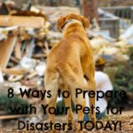 8 Ways to Prepare with Your Pets for Disasters TODAY!