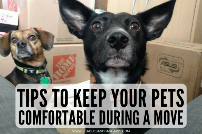 Tips to Keep Your Pets Comfortable During a Move