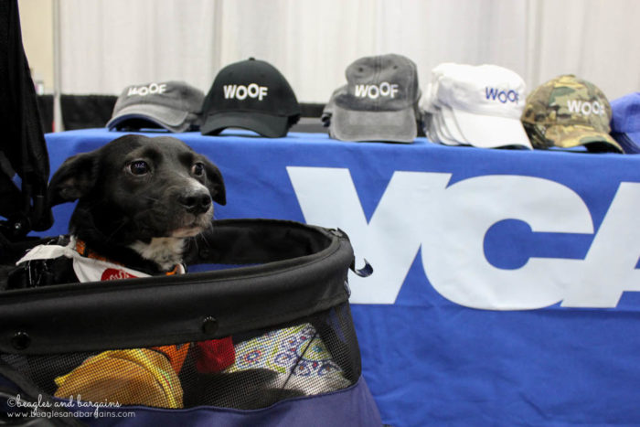 BlogPaws 2017 - Ralph visits the VCA booth in the exhibit hall