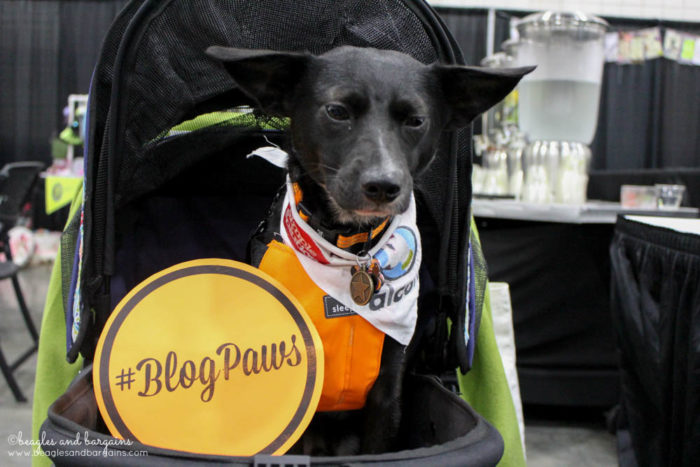 BlogPaws 2017 - Ralph enjoys his BlogPaws experience