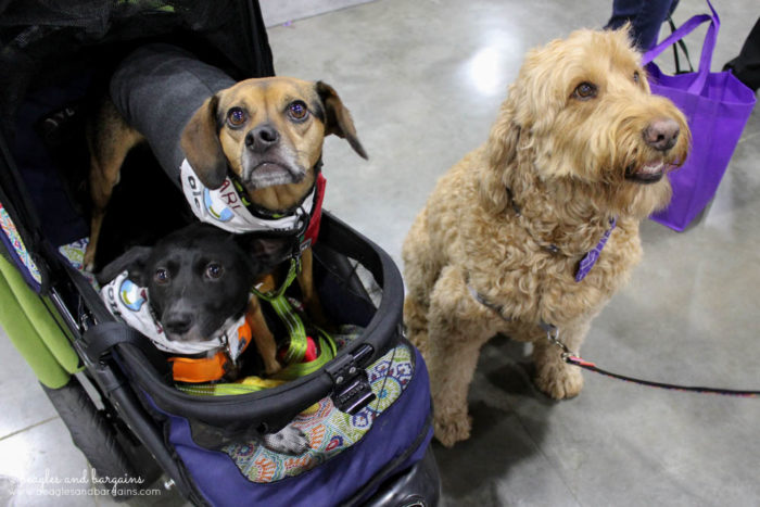 BlogPaws 2017 - Ralph & Luna hang out with Spencer the Goldendoodle