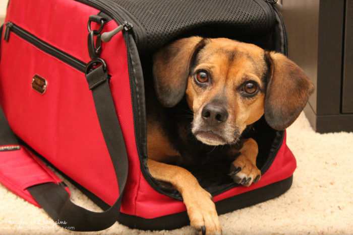 8 Ways to Prepare with Your Pets for Disasters TODAY! - Keep Pet Carriers by Exits - Sleepypod Air