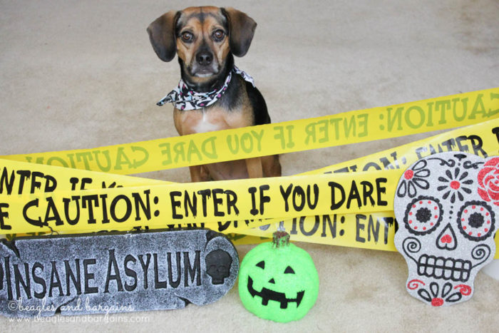 7 Scary Halloween Hazards for Pets