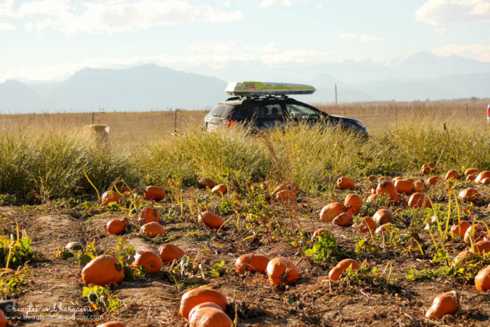 Pumpkin Picking at Rock Creek Farm